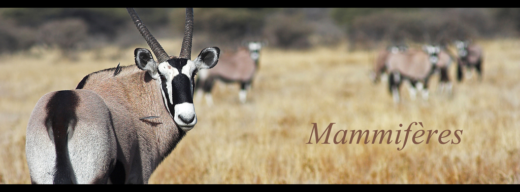 oryx_groupe_lien