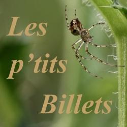 spider_link