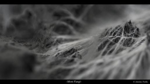 Mont Fungi