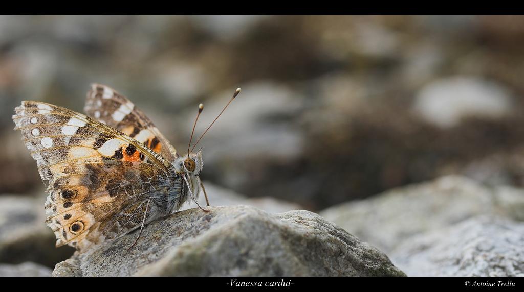 Belle dame sur rocher