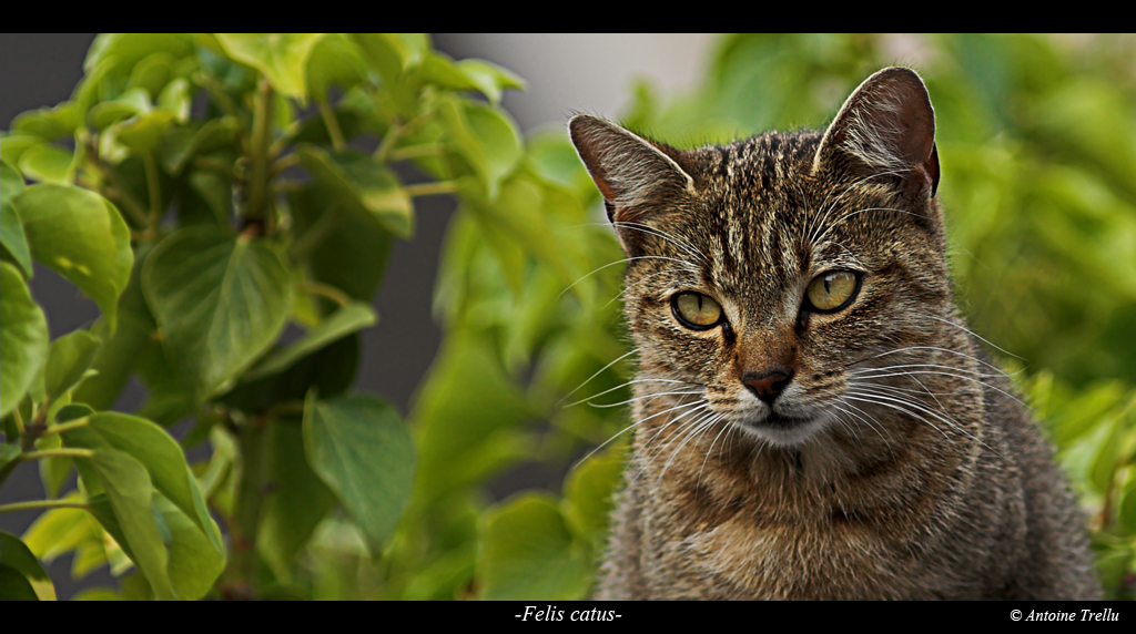 chat entouré de feuille